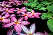 fleur-tiare-bangkok