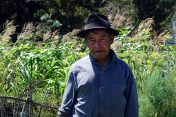 San Pedro la Laguna, Guatemala : Alberto qui cultive ses légumes avec amour au bord du lac Atitlan.