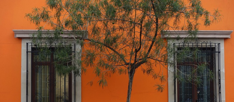 orange oaxaca